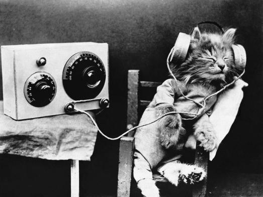 cat at radio